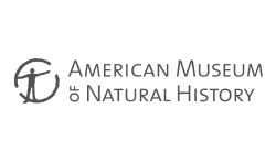 American Museum of Natural History Client Website Logo